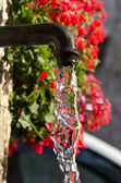 Tap and red geraniums — Stock Photo