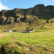 Foto Stock: Farm in Iceland