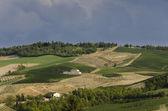 Colinas y viñedos — Foto de Stock