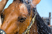 Horse in the shower — Stock Photo