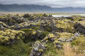 Moss in Iceland — Stock Photo