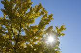 Drzewo jesień — Zdjęcie stockowe