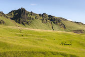Meadows in Iceland — Stock Photo