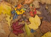 Podzimní karta — Stock fotografie