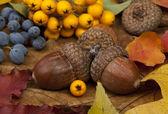 Hösten kort — Stockfoto