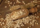 Wheat — Stockfoto