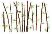 Watercolor Bamboo — Stock Photo
