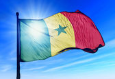 Senegal flag waving on the wind — Stock Photo