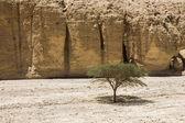 Eilat beach — Stockfoto