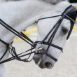 Stock Photo: Head of gray horse. Equestrian sport.