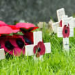 Remembrance Poppies Wreath — Stock Photo