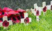 Papoulas recordação coroa de flores — Foto Stock