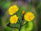 Yellow wildflowers — Stockfoto
