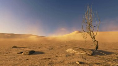 Sunset in a desert with dead trees and sand blowing — Stock Video