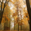 Foggy autumn Forest with colorful Trees — Stock Photo #32150633