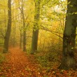 Foggy autumn Forest with colorful Trees — Stock Photo
