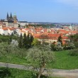 View on the spring Prague gothic Castle with the green Nature and flowering Trees, Czech Republic — Stock Photo