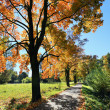 Colorful autumn Landscape with blue Sky — Stock Photo