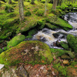 Creek in the beautiful Wilderness, the autumn Mountains Sumava in southern Czech — Stock Photo #36061553