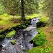 Creek in the beautiful Wilderness, the autumn Mountains Sumava in southern Czech — Stock Photo #36060527