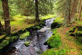 Torrente nel deserto bello, l'autunno sumava montagne nel sud ceca — Foto Stock