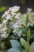 Lente bloesem achtergrond - abstract floral grens van groene bladeren en witte bloemen — Stockfoto