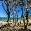 Noosa National Park — Foto de Stock