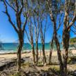 noosa national park — Stock Photo