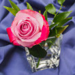 Pink rose on a blue background — Stock Photo