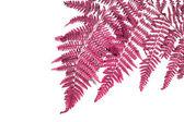 Plant decoration — Stockfoto