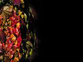 Pflanzen dekoration — Stockfoto