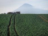 Large green field — Stock Photo