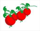 Cherry tomatoes — Stock Vector