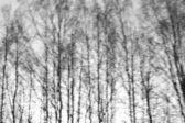 Легкий осенний лес — Foto de Stock