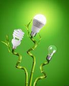 Light Bulbs On Bamboo — Stock Photo
