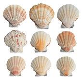 Set of seashells — Stock Photo