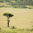 Safari landscape — Stock Photo