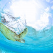 Turtle  underwater — Stock Photo
