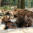 Bears Playing in Water — Stock Photo #34827363