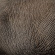 Elephant skin full frame shot — Stock Photo #33349909