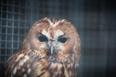 Owl in a cage at the zoo — Stock Photo