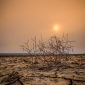 Sunset on the dry lake — Stock Photo