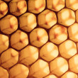 Honeycombs of bees — Stockfoto