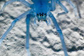 Blue spider — Stock Photo
