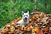 犬と紅葉 — ストック写真