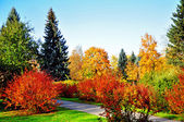 Yellow, red, green trees and bushes in the autumn — Stock Photo