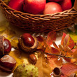 Apples in a basket and chestnuts — Stock Photo
