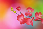Orchid on colored background — Stock Photo