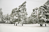 Snowy tree — Stockfoto