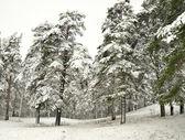 Zasněžený strom — Stock fotografie